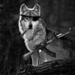 Wolf-Terrorist-415x300, From ImagesAttr