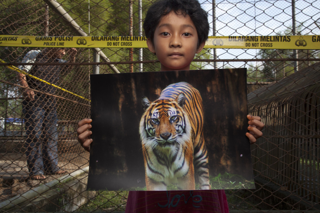 Girl holding photo of tiger - MM7666_090825_1605_4522