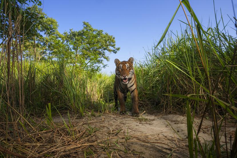 Kaziranga National Park, camera trap