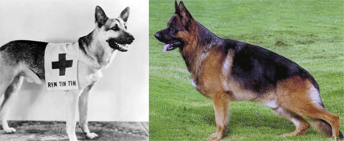 Dog Breed Comparison Over Time