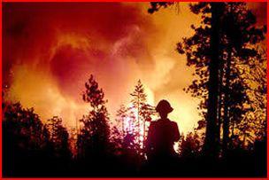 wildfire, says govt