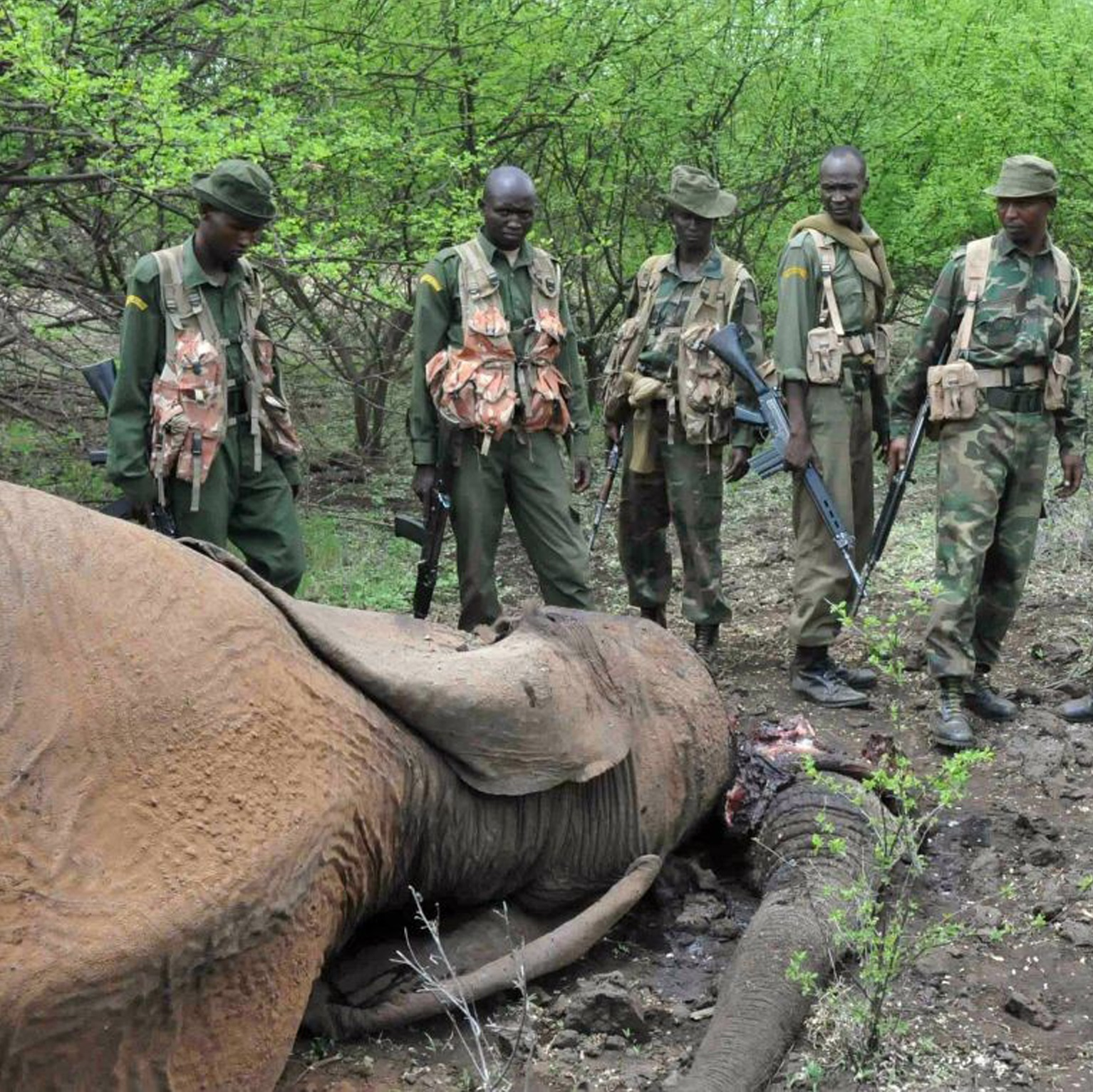 an analysis of the poaching and wildlife management in africa 1 section 1 key findings key finding 1 poaching in sub saharan africa was produced via the historical legacy of colonialism one of the legacies of colonialism was that legal rights to hunt were removed from africans.