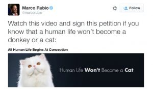 Marco Rubio Cat Tweet Twitter Screenshot