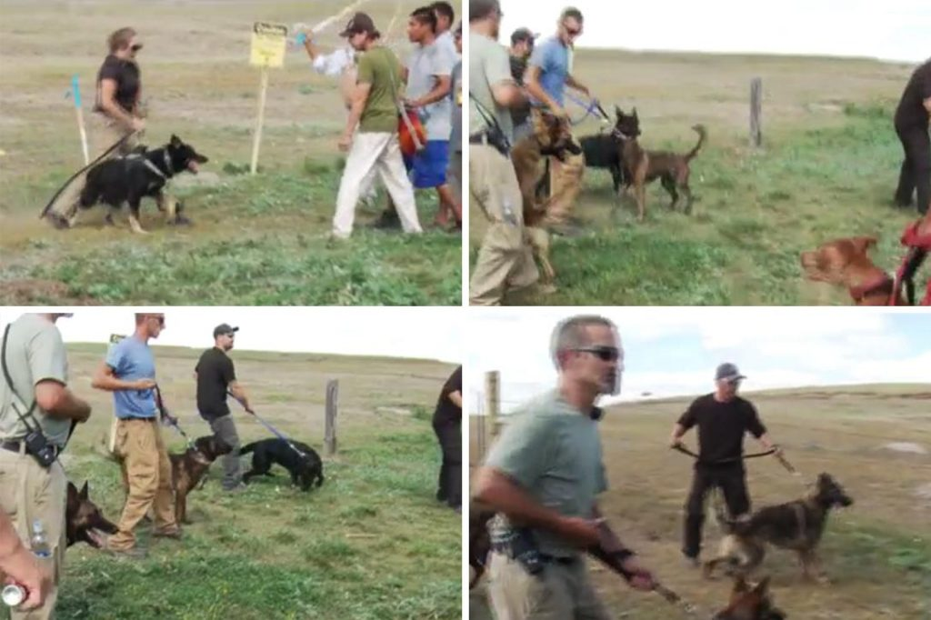 Guards with attack dogs at pipeline protest. Photo credit: Adapted by WhoWhatWhy from Democracy Now