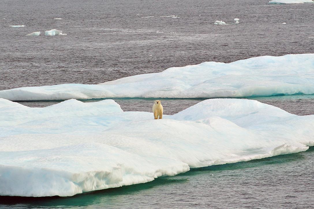 Arctic_1088x725.jpg