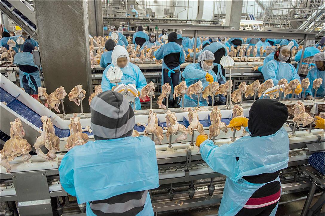 Chicken Workers