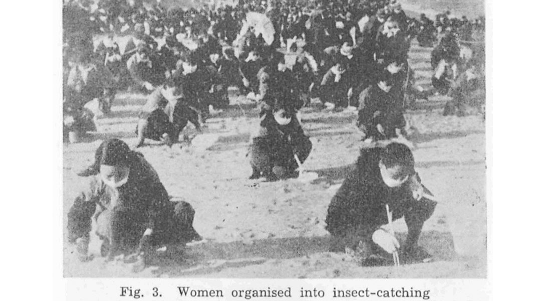 Korean War, insects, biological weapons, women