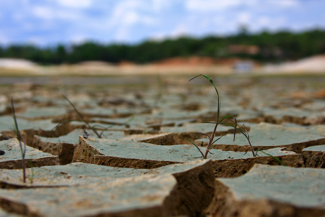 Drought, Amazon, rainforest