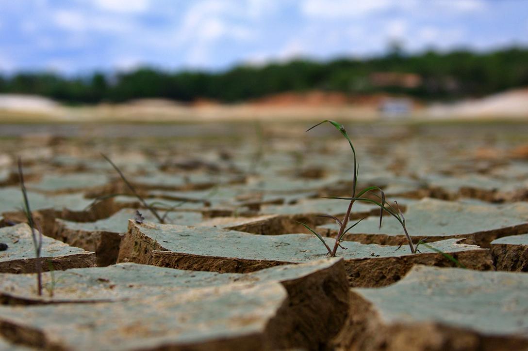 Drought, Amazon, rainforest