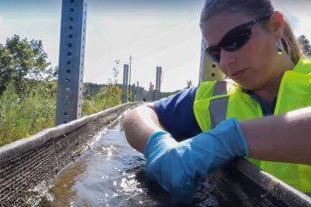 algal turf scrubber