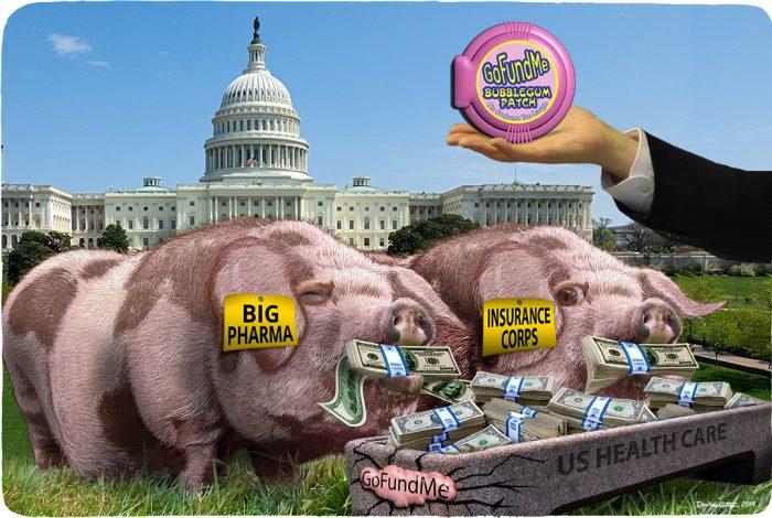 pigs, health care, GoFundMe