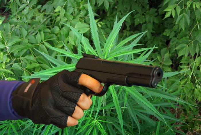 gun, marijuana, cannabis