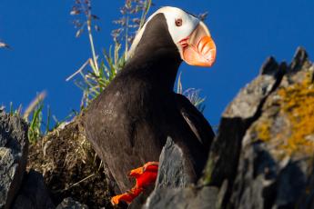 Climate change, seabird deaths