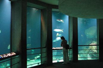 Climate change, Baltimore Aquarium