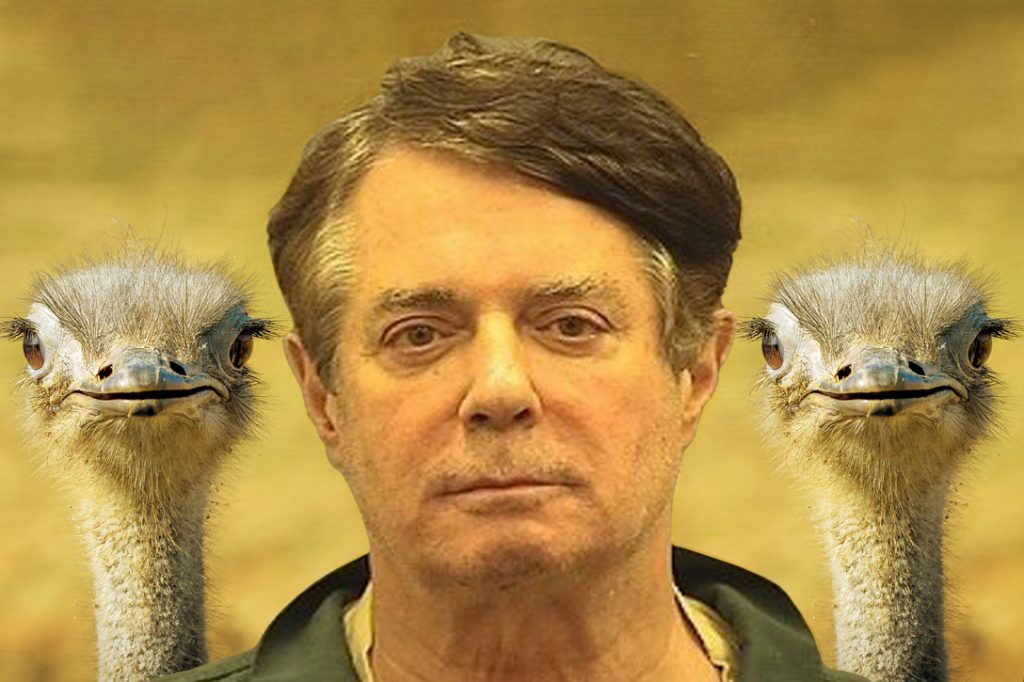 Paul Manafort, ostrich