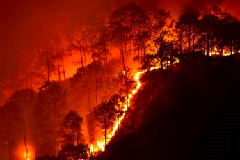 Brazil, forest fires, climate crisis