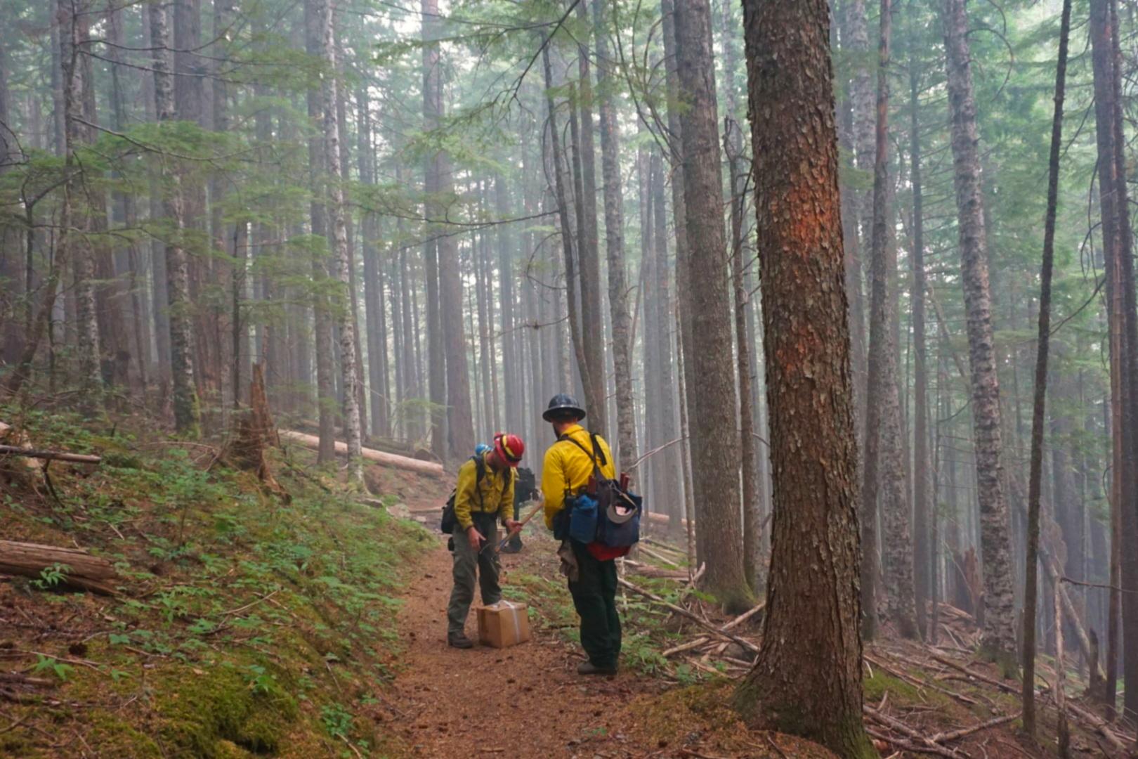 climate change, forest restoration