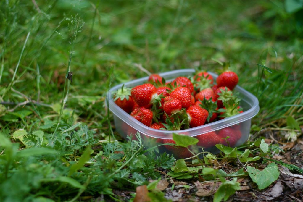Strawberries, Fresh, Fresh strawberries, Green
