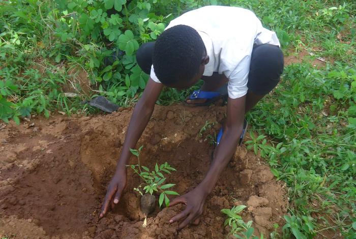 planting trees, climate change, debate