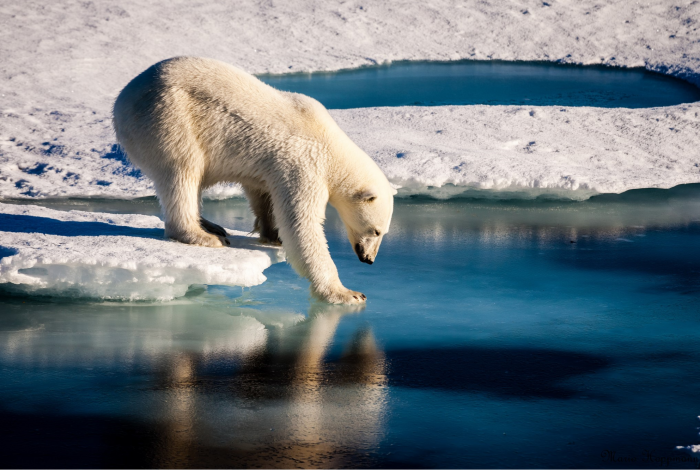 climate, arctic permafrost, vulnerable