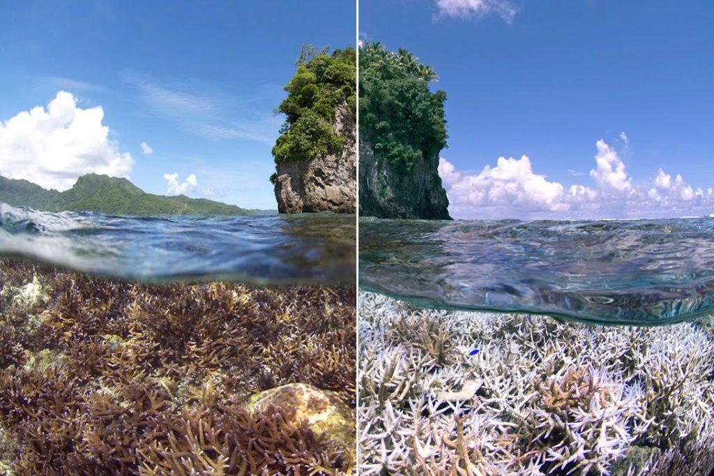 American Samoa, coral bleaching