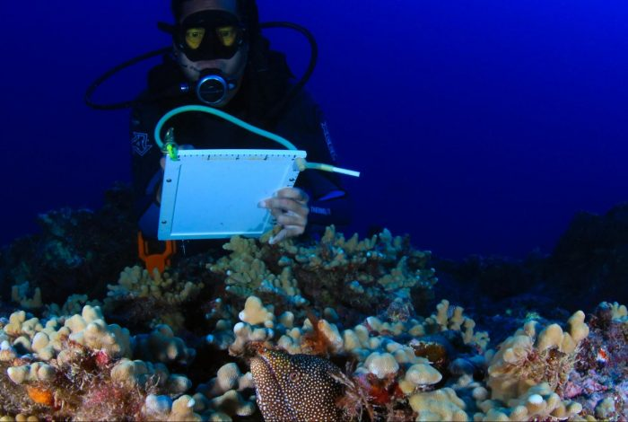 coral reefs, rescue, World Oceans Day