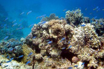 climate crisis, corals, Red Sea, heat tolerance