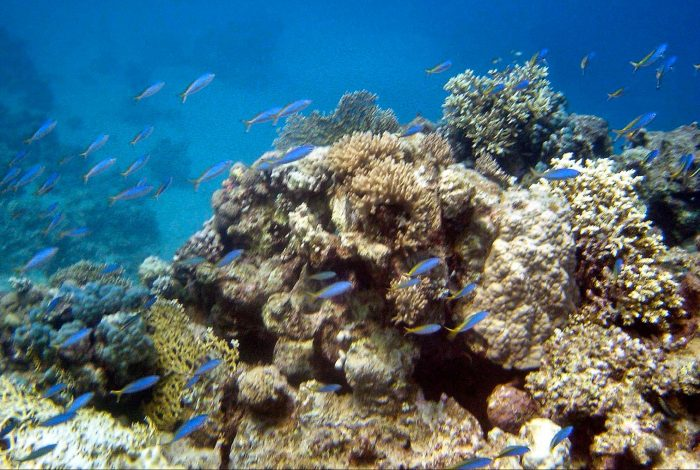 climate crisis, corals, Red Sea, heat tolerance
