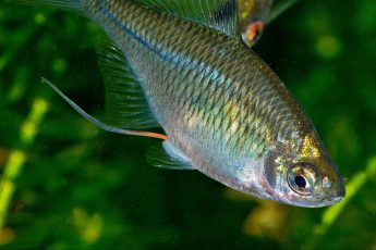 climate change, spawning fish, water temperature