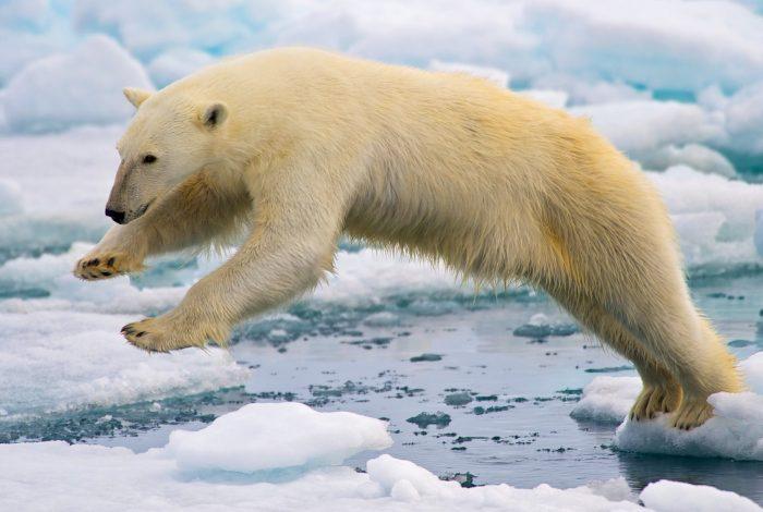 climate change action, delayers, scientists