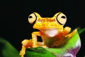 biodiversity, habitats, species, Earth, UN report
