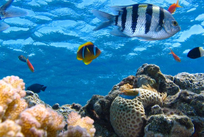 climate change, shellfish, migration, ocean temperature