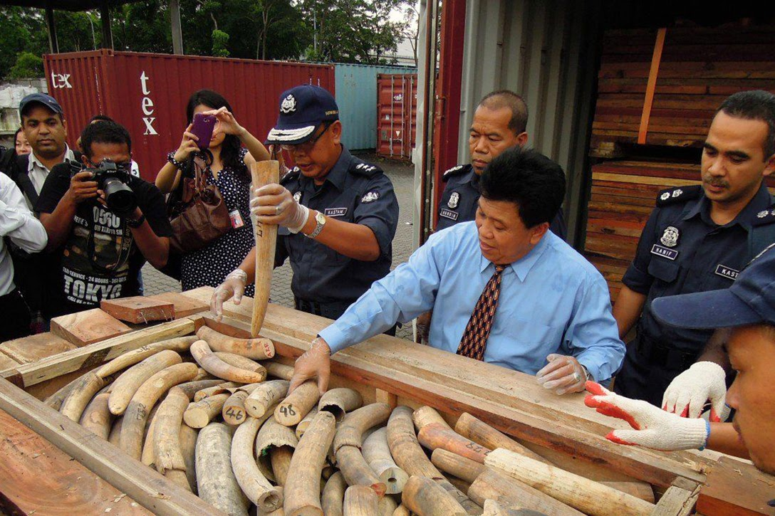 poaching, elephant, ivory