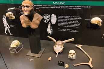 climate change, ancient ancestors, homo erectus, extinction