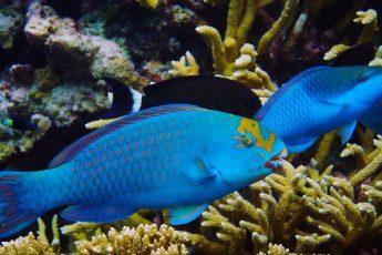 US coral reefs, study, climate change, decline
