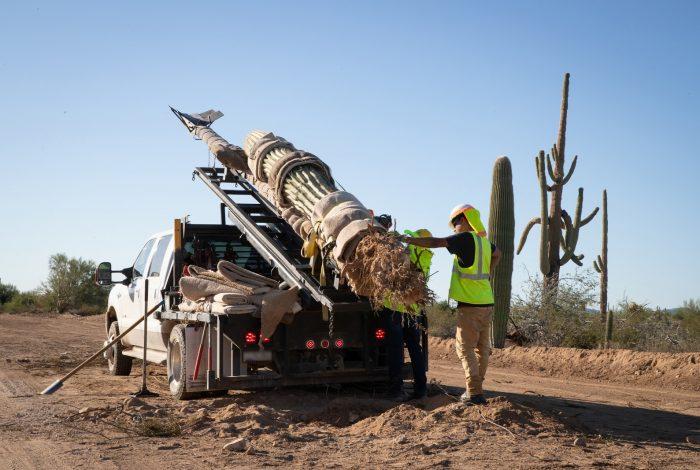 Organ Pipe, saguaro cactus, border wall