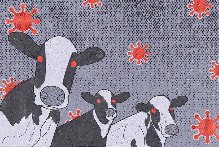 Factory Farming, Intensive Farming, global warming, climate change, climate crisis, cows, environment, mad cow disease, pandemic, covid, covid-19