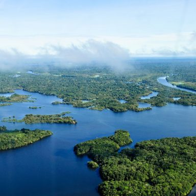 How We Turned the Amazon Into a Net Greenhouse Gas Emitter