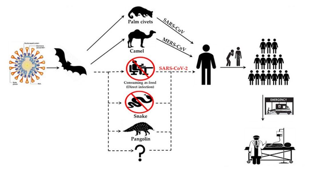 interspecies transmission routes, SARS-CoV, MERS-CoV
