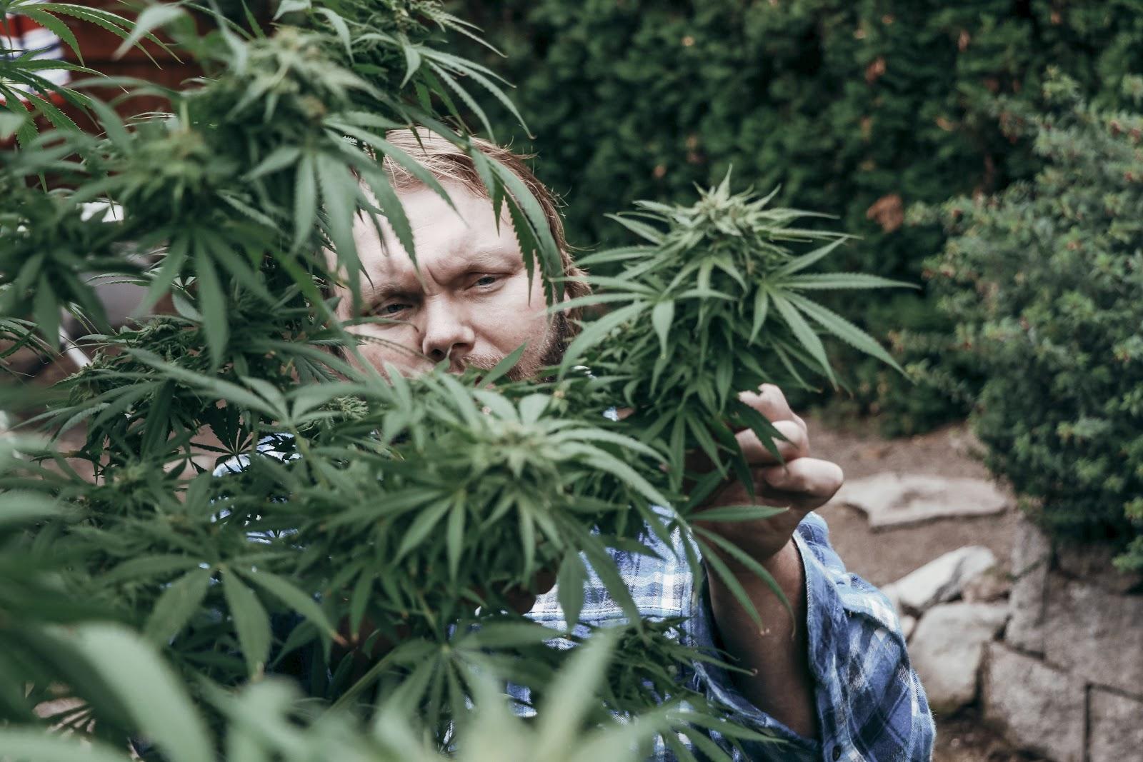 Marijuana, farmer