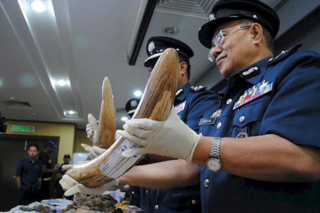 poached, ivory, police
