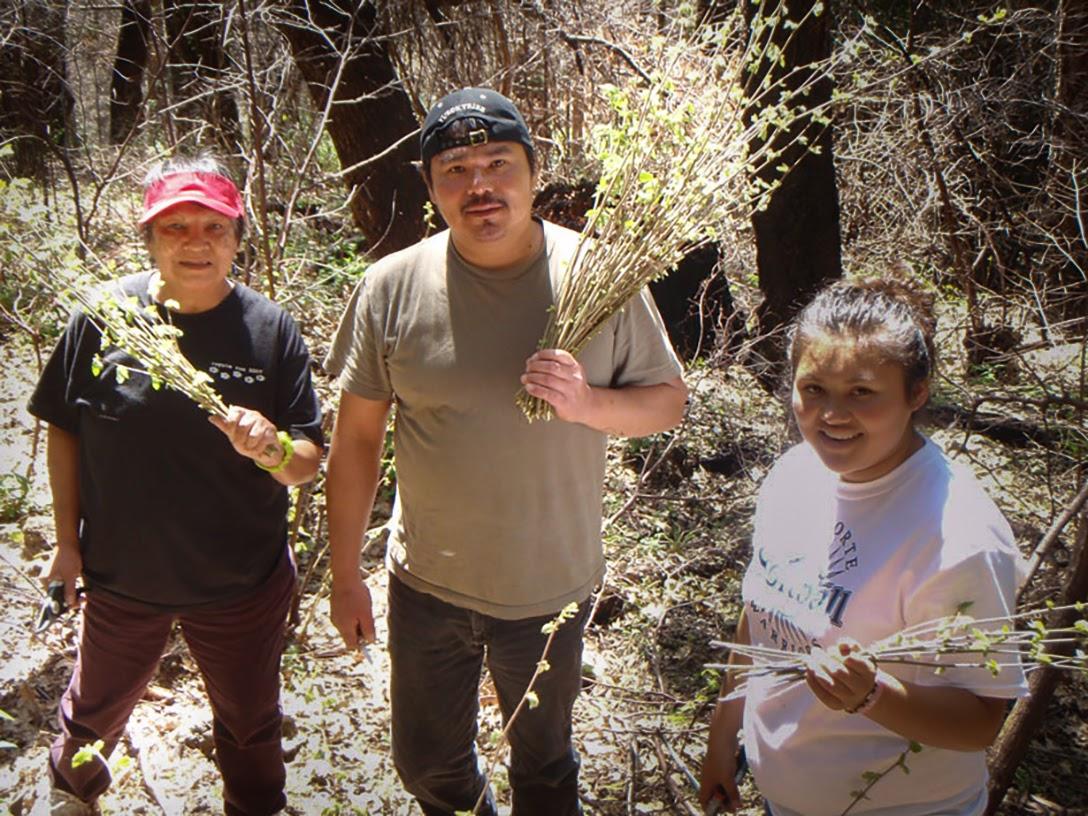 Three generations, Yurok, gather hazelnuts