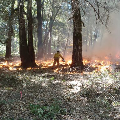 Fire as Medicine: Learning from Native American Fire Stewardship