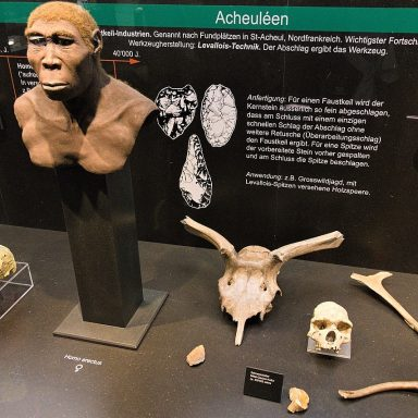 Climate Change Likely Drove Early Human Species to Extinction, Modeling Study Suggests