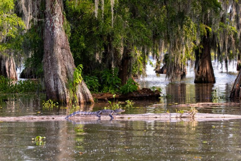 Mississippi River, rerouting, coastal erosion, ecosystem engineering