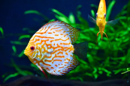 freshwater fish, at risk, extinction, study