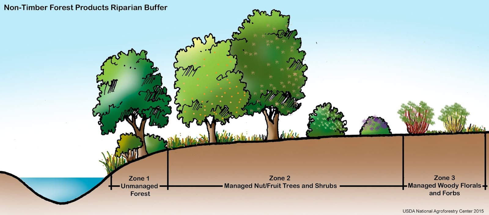 Riparian Buffer, Agroforestry