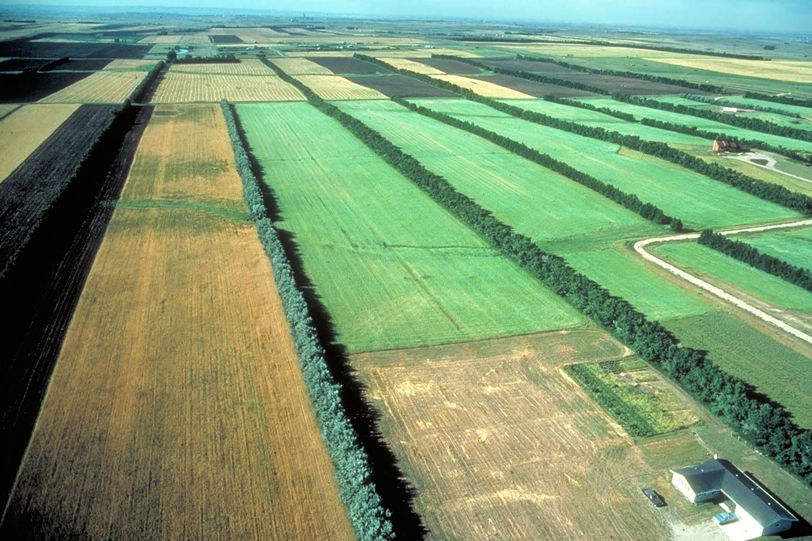 Windbreaks between fields