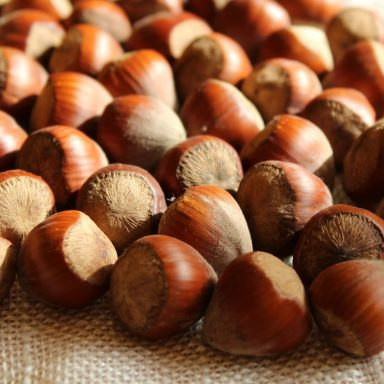 Nuts About Agroforestry: Can Hazelnuts Transform Farming?