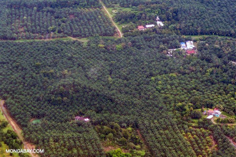 Oil palm plantations, Borneo